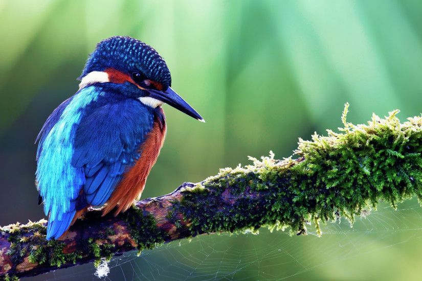 Best Bird Picture · Beautiful Bird Wallpaper
