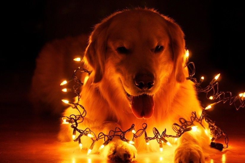 christmas dog wallpaper download