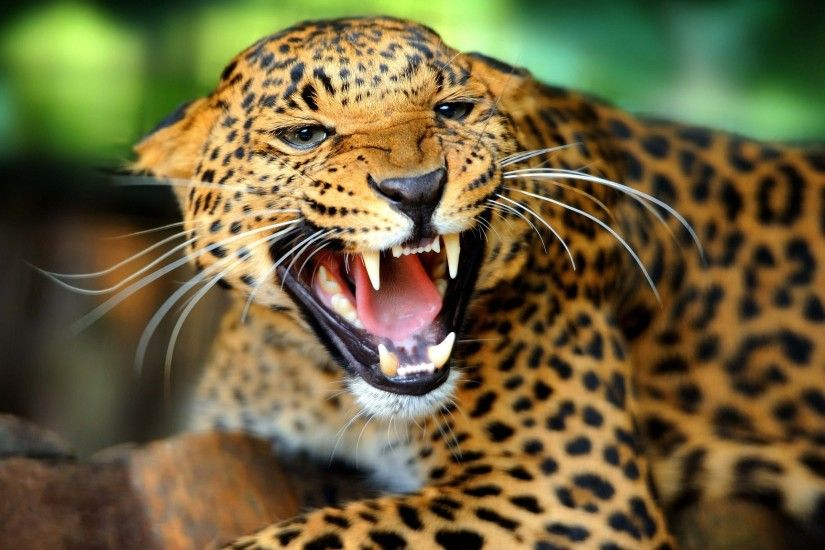 Cool Wild Animal Wallpapers Wide
