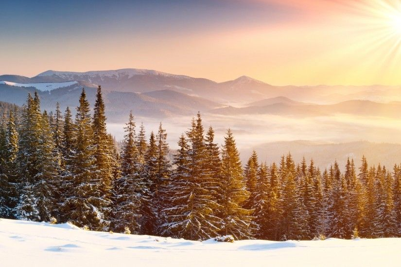 Snow Forest wallpapers and stock photos