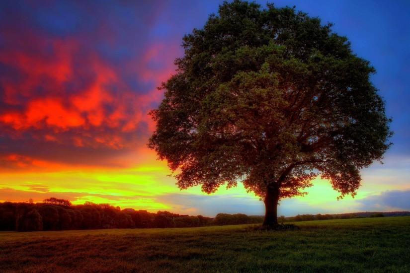 download free tree wallpaper 1920x1080 ios