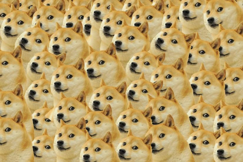 top doge wallpaper 2880x1800 free download