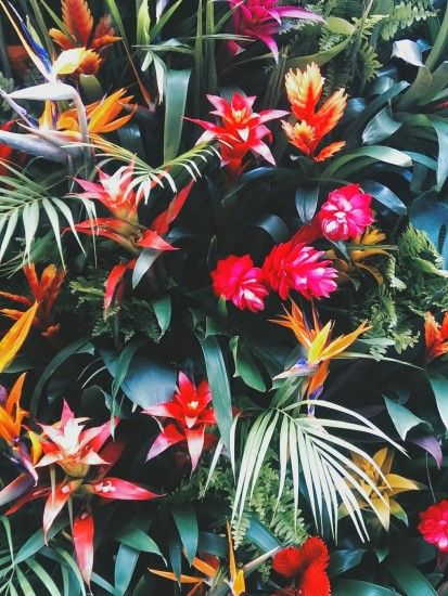 PALM COLORFUL TUMBLR - Chelsea In Bloom. Floral WallpapersCool ...