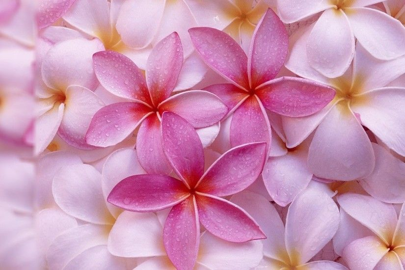 9. pretty-flowers-wallpaper9-1-600x338