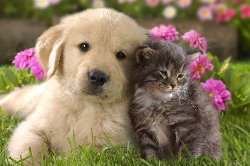 nature, Animals, Grass, Puppies, Kittens, Cat, Dog, Flowers, Baby Animals,  Labrador Retriever Wallpapers HD / Desktop and Mobile Backgrounds