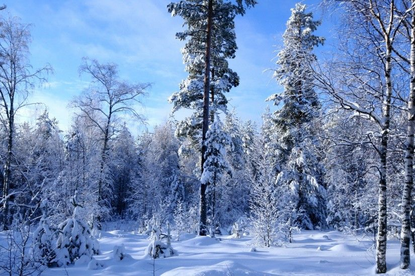 Photo Collection Wallpaper Winter Snow Forest