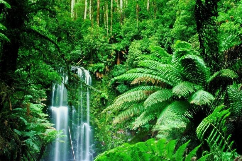 Green landscapes trees jungle forest rainforest wallpaper | 1920x1080 .