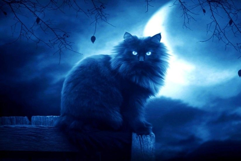... 29 Cat Backgrounds, Wallpapers, Images | Design Trends - Premium ...  Warrior ...