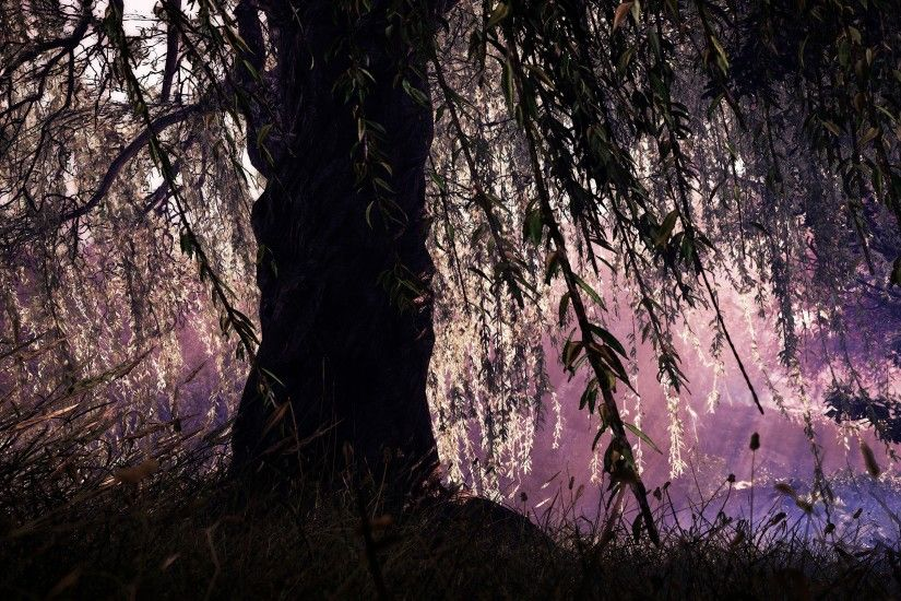 sunlight forest night nature plants branch calm relaxing wind Shadow  Warrior 2 willow trees weeping willow