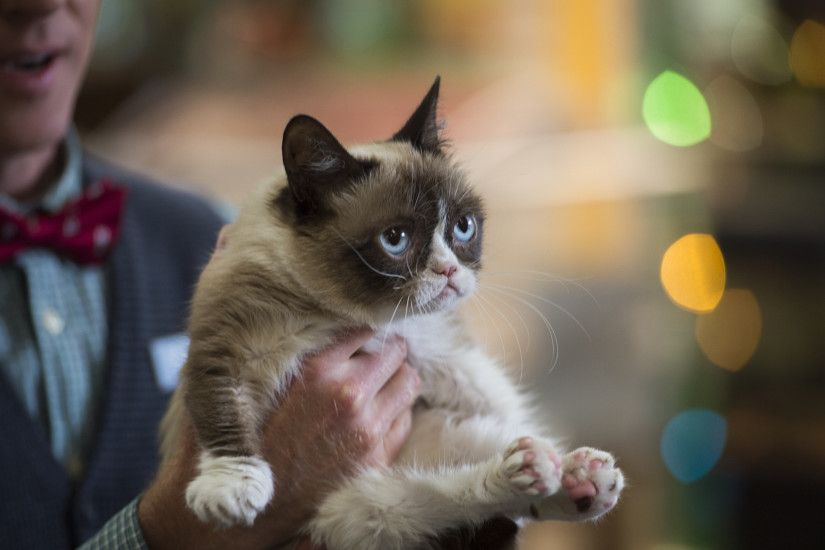 Should You Watch 'Grumpy Cat's Worst Christmas Ever'? A Handy Personalized  Guide | IndieWire