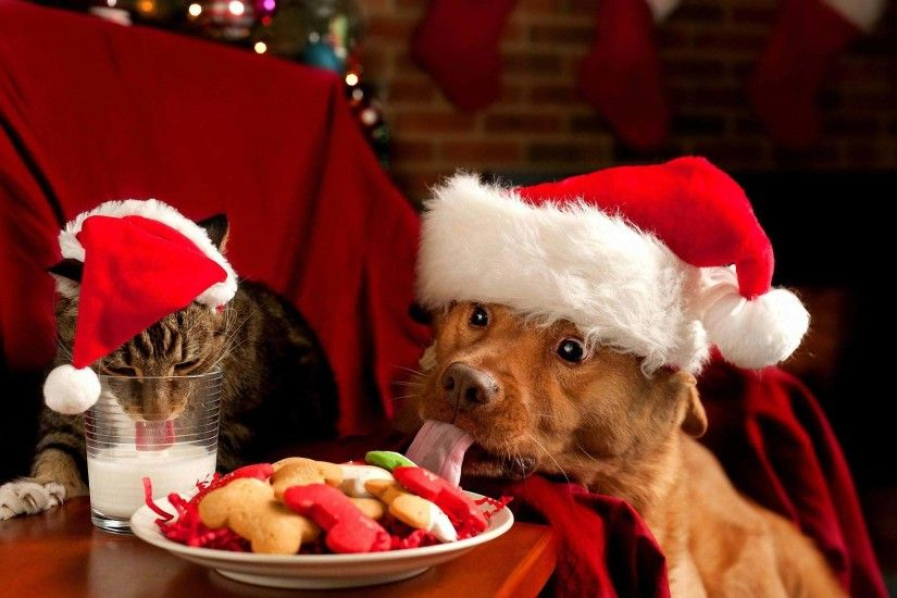 Funny Christmas Dogs 3 Free Hd Wallpaper