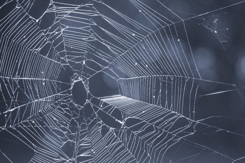 close up on a spiders web