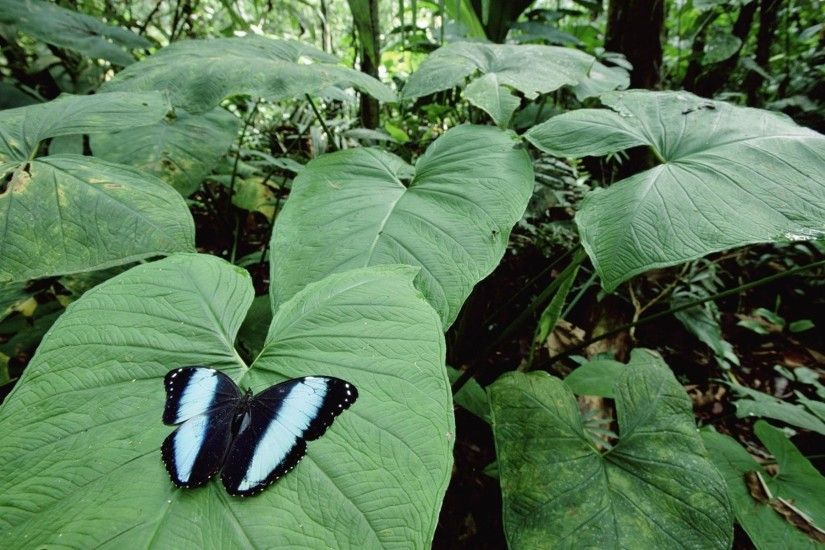 Tropical Rainforest Butterflies · tropical rainforest