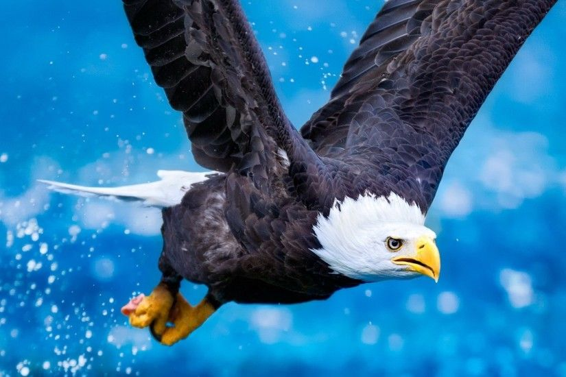Preview wallpaper eagle, flying, sky, swing, predator 1920x1080
