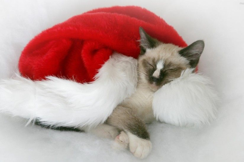Cute and lovely christmas cat hd wallpaper photos 8