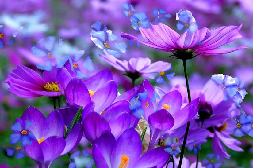 Purple Flower Wallpaper High Quality