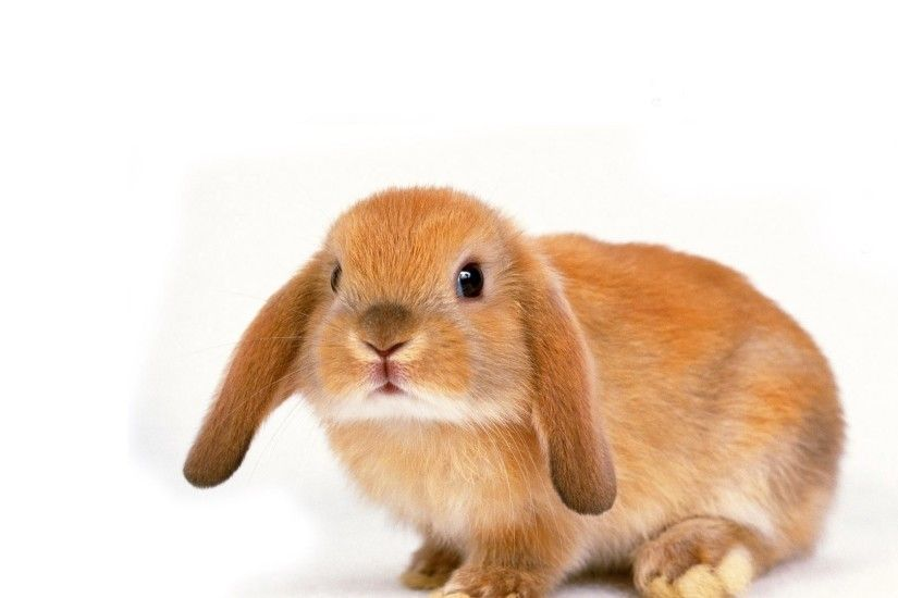 1920x1200 Cute Bunny Wallpaper In 1920x1200 Resolution Free Wallpapers  Download