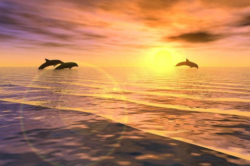 The dolphin desktop sunrise jumping wallpapers free desktop .