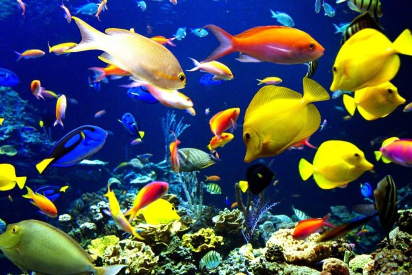 Cool Fish Jootix Free Wallpaper, HQ Backgrounds | HD wallpapers .
