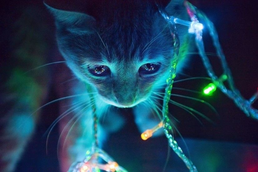 christmas-lights-cat-wallpapers_35612_1920x1200 - Cute Cat Wallpapers