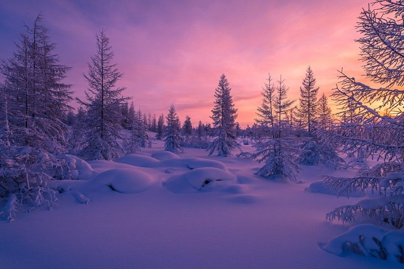 Nature / Winter forest Wallpaper