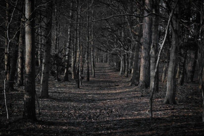 Backgrounds For Spooky Forest Desktop Backgrounds | www ... Backgrounds For  Spooky Forest Desktop Backgrounds