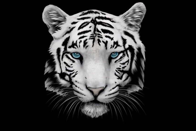 white tiger and blue eyes uhd wallpapers - Ultra High Definition . ...