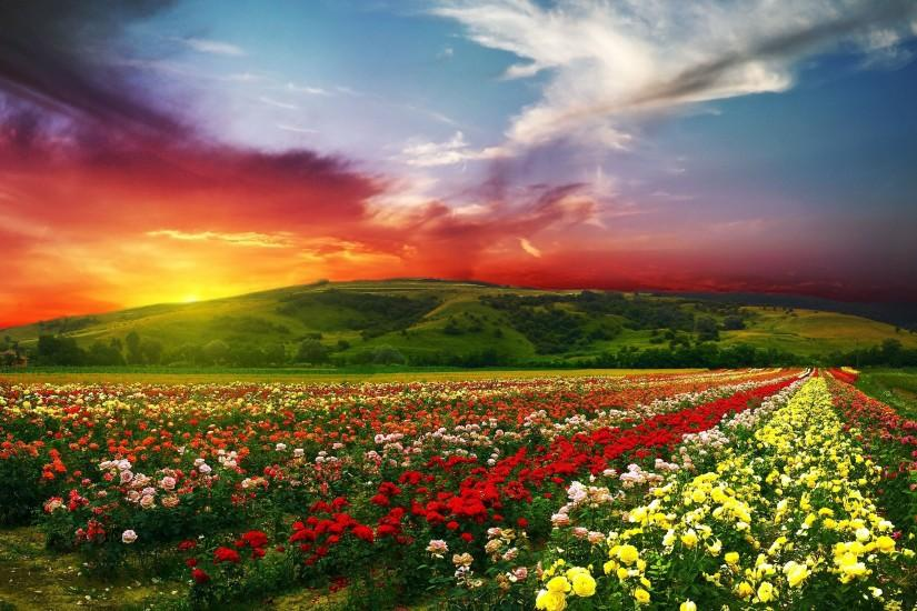 Ultra HD Wallpaper, flower 4K | ... flowers with colorful clouds 4K Ultra