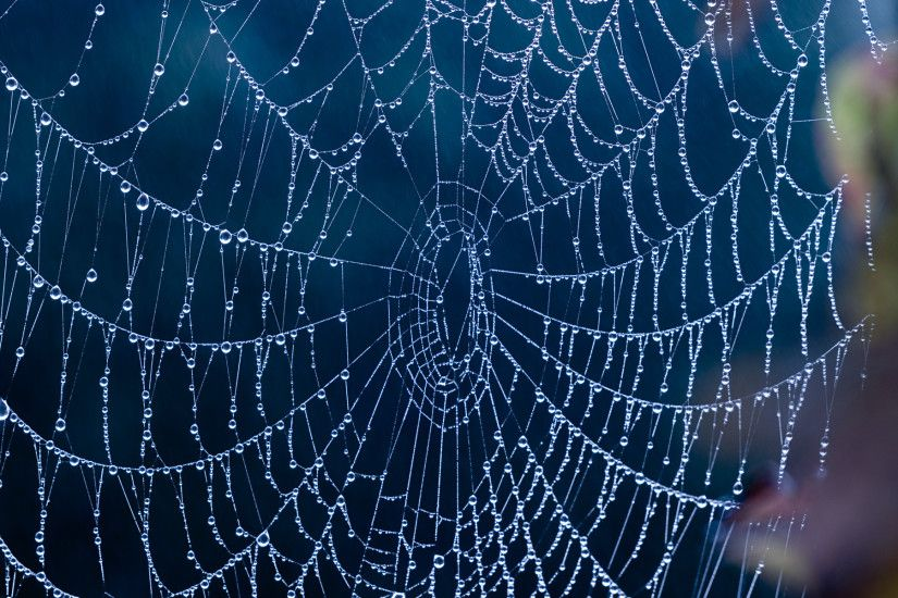 17 Incredible spiderweb wallpapers with water drops and ice. Size: ...