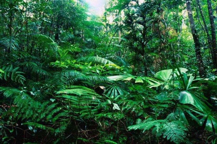 Tropical Rainforest wallpaper - 990284