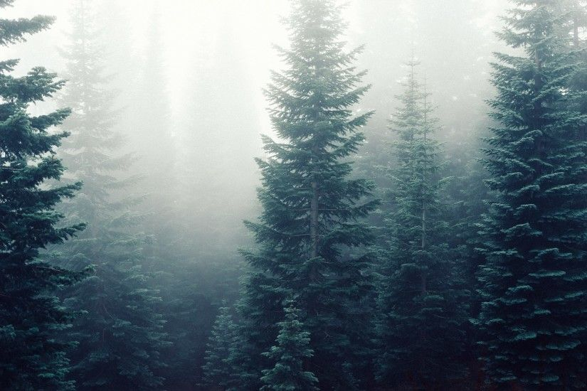 forest desktop wallpaper hd wallpapers