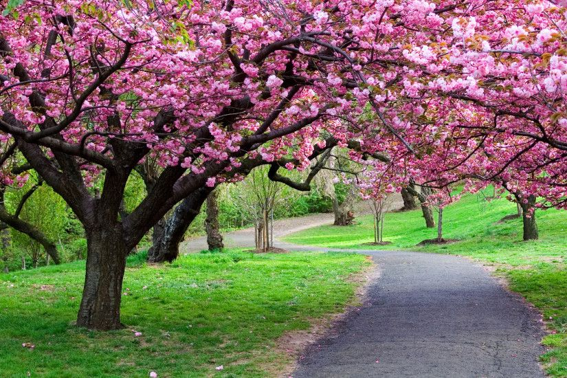 Spring tree - Other & Nature Background Wallpapers on Desktop . ...