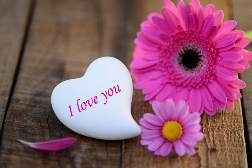 pink-daisies-heart-stone-i-love-you-wide- ...