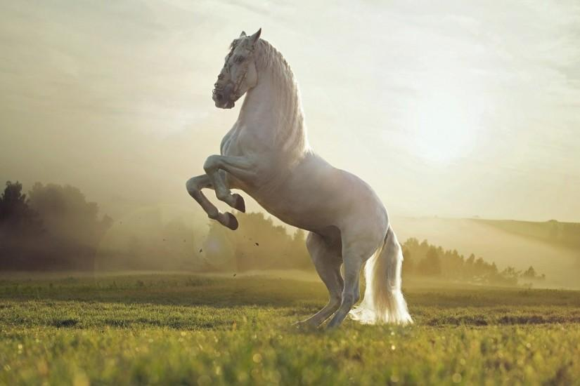 beautiful horse backgrounds 1920x1080