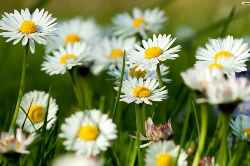 download spring flowers wallpaper 1920x1200 for 4k