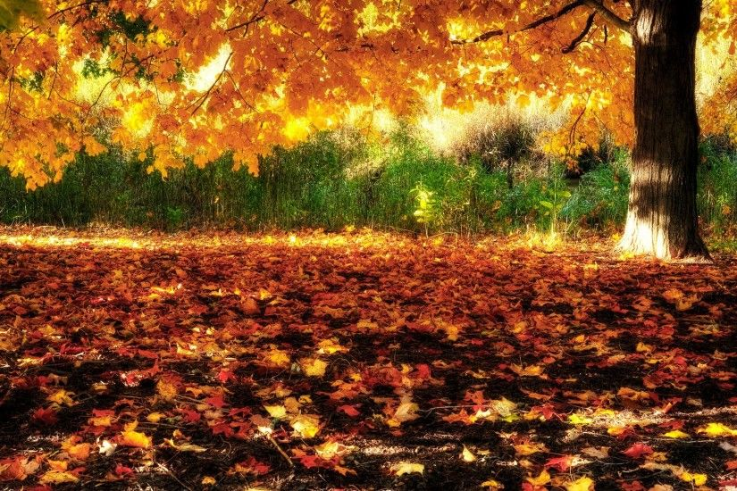 Fall of Autumn Leaves Desktop Wallpaper | Download High Resolution .