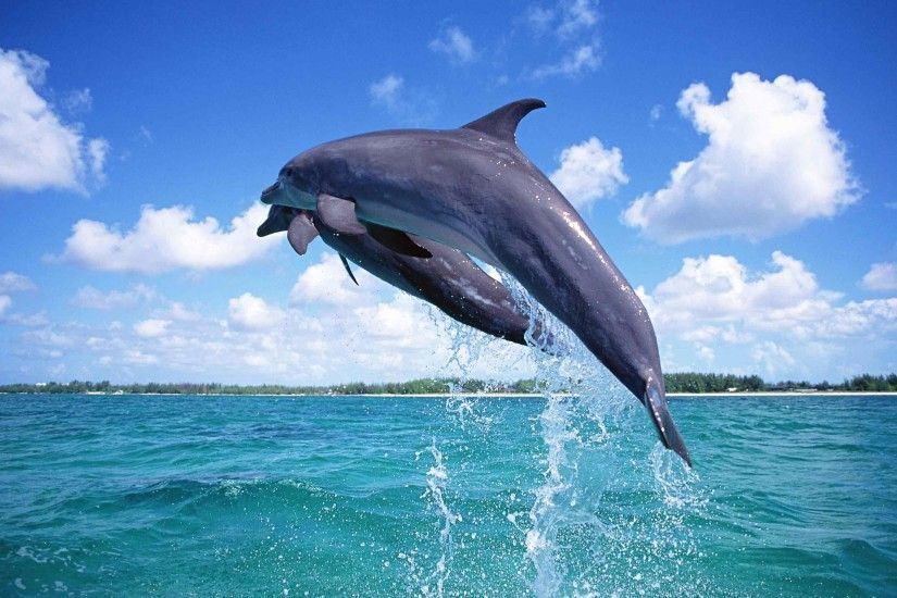 picture dolphin fish wallpaper