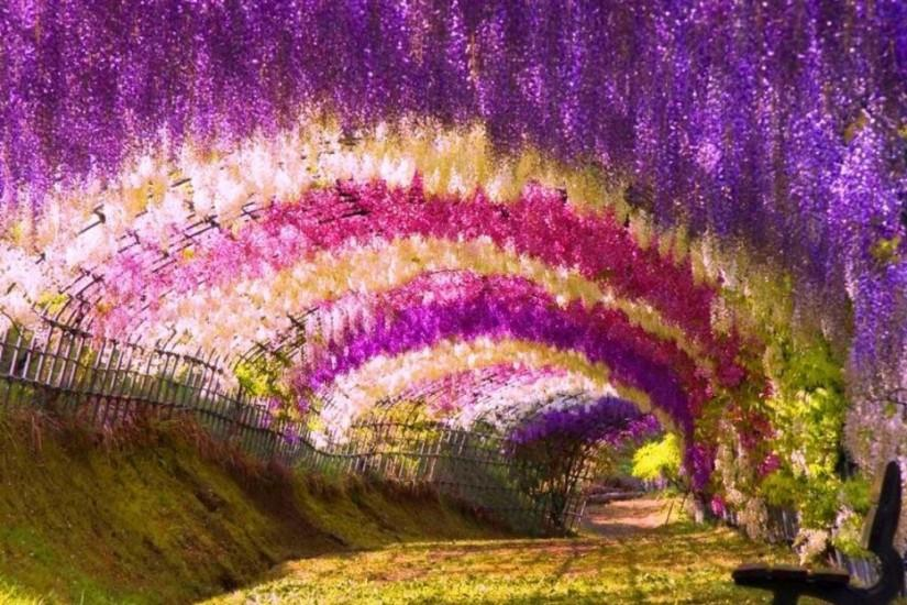 Japanese Garden HD Wallpaper