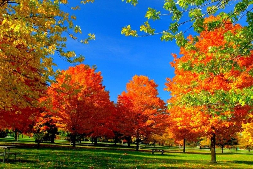 Leaf Nature Fall Color Autumn Seasons Season Landscape Leaves Tree Forest  Live Wallpaper Android - 1920x1200