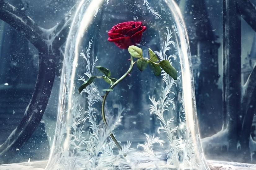 Movie - Beauty And The Beast (2017) Rose Red Rose Flower Wallpaper