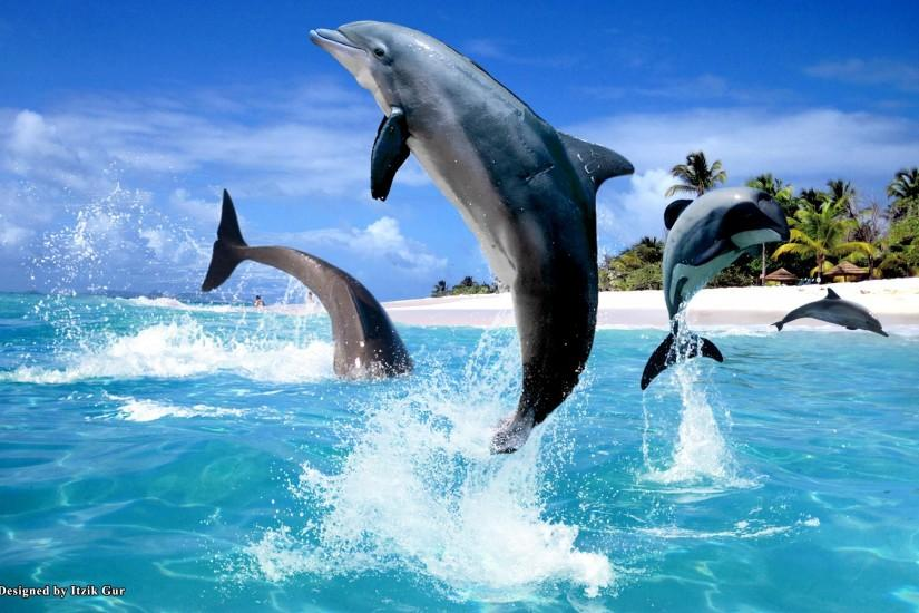 3D Desktop Wallpaper Dolphins - www.wallpapers-in-hd.com