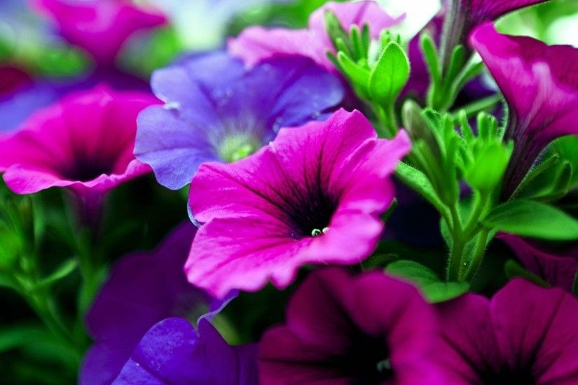 3840x2160 Wallpaper kalihobriya, flowers, bright, pink, purple, close-up
