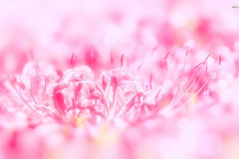 we provide Beautiful and Latest Pink Flowers Wallpaper. All wallpapers .