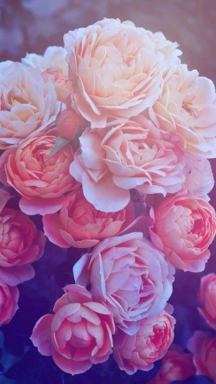 "Search Results for ""roses wallpaper iphone – Adorable Wallpapers"