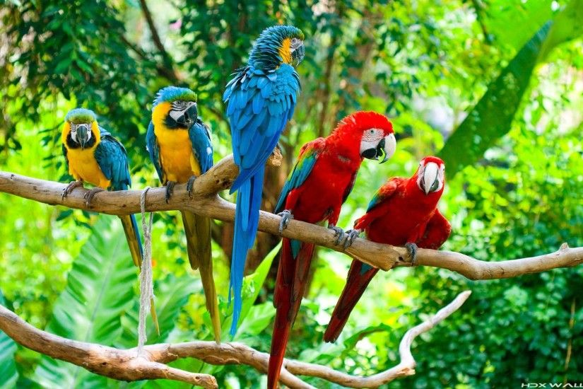 Images For > Blue Macaw Parrot Wallpaper