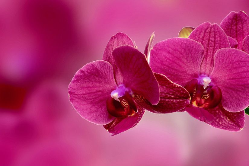 Preview wallpaper orchid, flower, petals, pink 3840x2160