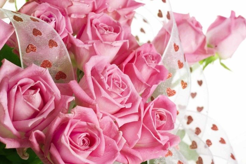 Pink rose backgrounds download.