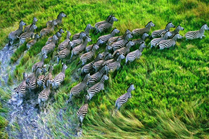 ... OSX Leopard wallpapers. Zebras Earth Horizon