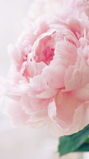 2244 11: Nature Spring Bloomy Peony Macro iPhone 7 wallpaper: Retina ...