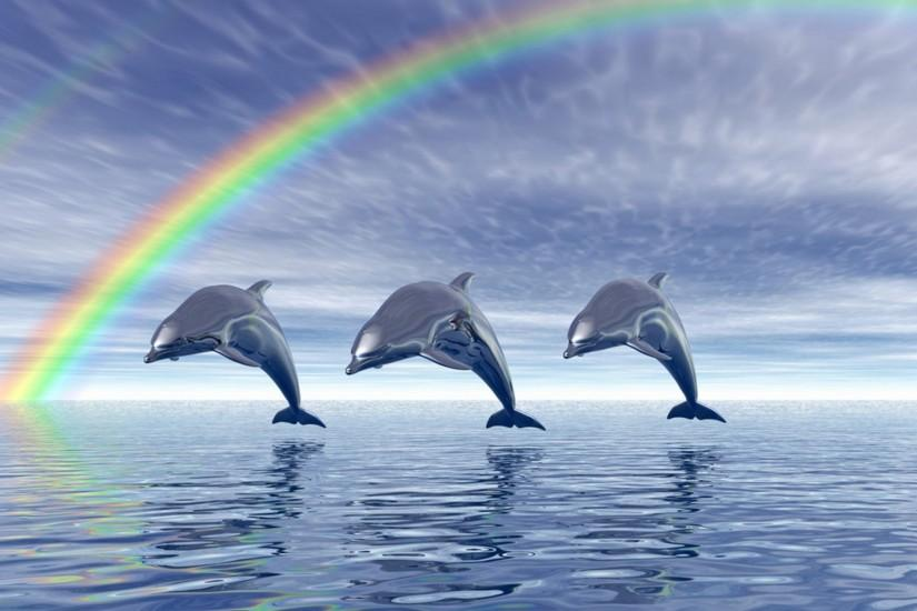 Dolphin HD Wallpaper_11 | HD Wallpapers